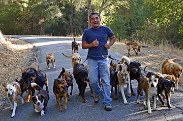 César Millán y su manada de perros